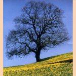 Egy fa